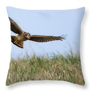 Northern Harrier Hawk Scouring The Field Throw Pillow
