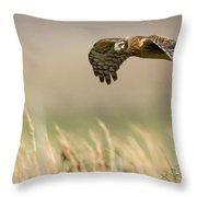 Northern Harrier Hawk Skimming The Fields Throw Pillow