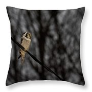 Northern Hawk-owl 22 Throw Pillow