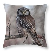 Northern Hawk Owl 9470 Throw Pillow