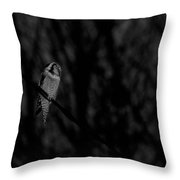 Northern Hawk-owl Bw18 Throw Pillow