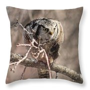 Northern Hawk Owl Having Lunch 9450 Throw Pillow