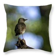 Northern Mockingbird At Quarry Lake Throw Pillow