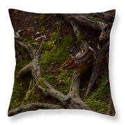 Northern Ohio Chipmunk Throw Pillow