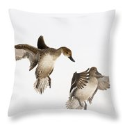 Northern Pintail Anas Acuta Duck Throw Pillow