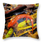 Northern Red Brook Throw Pillow