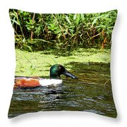 Northern Shoveler Drake Throw Pillow