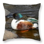 Northern Shoveler Duck Drake Throw Pillow