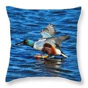 Northern Shoveler Duck Landing Throw Pillow