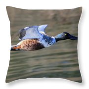Northern Shoveler On The Wing Throw Pillow