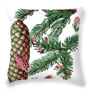 Norway Spruce, Pinus Abies Throw Pillow