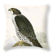 Norwegian Jer Falcon Throw Pillow
