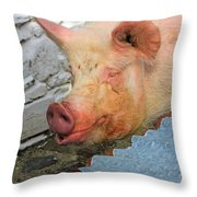 Not A Piglet Anymore Throw Pillow