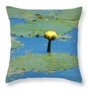 Not Bashful At All Throw Pillow
