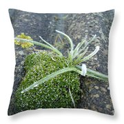 Not Quite A Roof Garden Throw Pillow