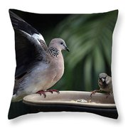 Not You Again 0084 Throw Pillow