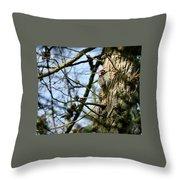 Nuttalls Woodpecker  Throw Pillow