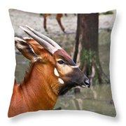 Nyala At The Watering Hole Throw Pillow