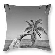 Oahu Palms Throw Pillow by Tomas del Amo - Printscapes