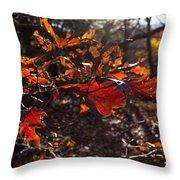 Oak In Evening  Throw Pillow