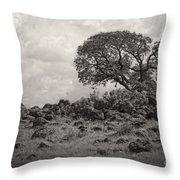 Oak In Rock Field Throw Pillow