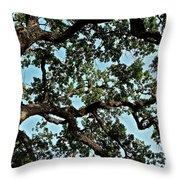 Oak Tree Three Throw Pillow