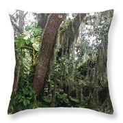 Oak Tree With Spanish Moss Throw Pillow