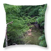 Observing  Throw Pillow