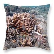 Ocean Fiji Throw Pillow