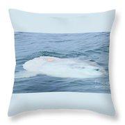 Ocean Sunfish Throw Pillow
