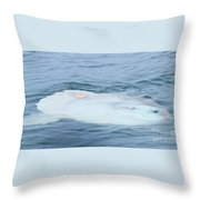 Ocean Sunfish Throw Pillow