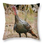 Oceola Turkey Throw Pillow