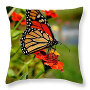 October Butterfly Throw Pillow