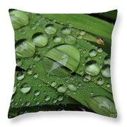 Drops Of Rain Throw Pillow
