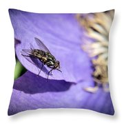 Odd Fly On Clematis Throw Pillow