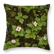 Ode To Eliot Porter Throw Pillow