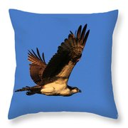 Osprey Flying By Throw Pillow