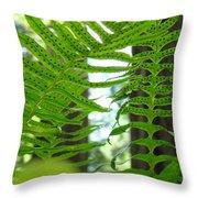 Office Art Ferns Redwood Forest Fern Giclee Prints Baslee Troutman Throw Pillow