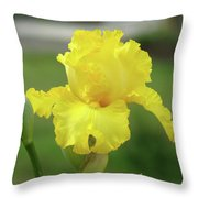 Office Art Irises Yellow Iris Flower Giclee Prints Baslee Troutman Throw Pillow