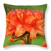 Office Art Prints Azaleas Botanical Landscape 11 Giclee Prints Baslee Troutman Throw Pillow