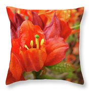 Office Art Prints Orange Azalea Flowers 20 Giclee Prints Baslee Troutman Throw Pillow