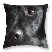 Oh Beau Beau Throw Pillow