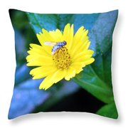 Oh My A Fly  Throw Pillow