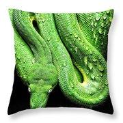 Oh So Green Viper Throw Pillow