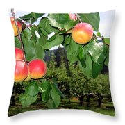 Okanagan Apricots Throw Pillow