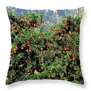 Okanagan Valley Apples Throw Pillow