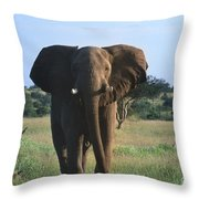 Okay - We Are Going Now Throw Pillow