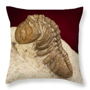 Oklahoma Trilobite. Throw Pillow