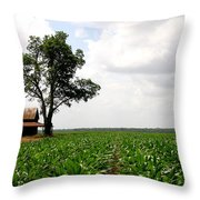 Old Barn In Sugar Cane Field Throw Pillow