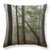 Old Beech Forest Throw Pillow